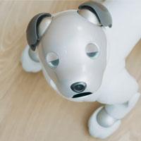 Робот собака от Sony с новым API теперь выступает в роли домашнего помощника